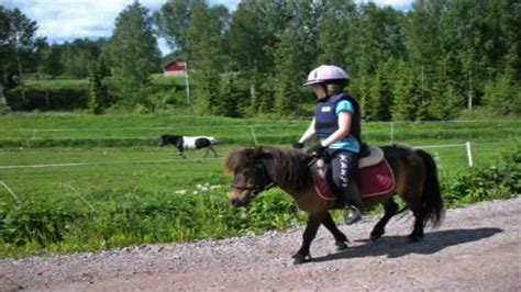 horse breeds children these shetland pony suitable morgan most
