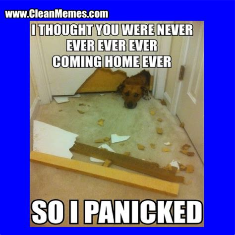Cleaning Memes - clean memes com memes best of the funny meme
