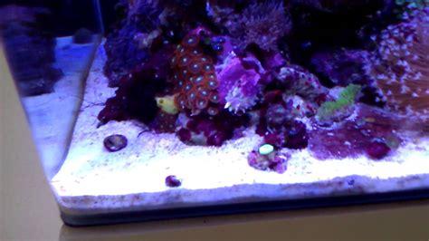 dennerle nano cube  marinus diy led youtube