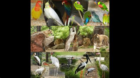 zoo zoological park hyderabad nehru india timings