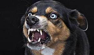 Britain faces growing threat of rabies from east European ...