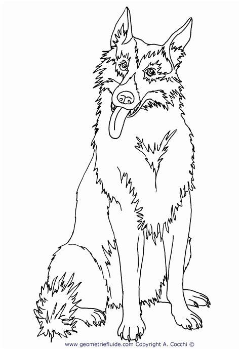 disegni da colorare e stare disegni di animali da stare e colorare gratis animali