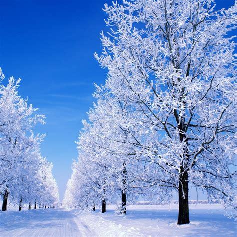 Snowy Winter Scenes Wallpaper