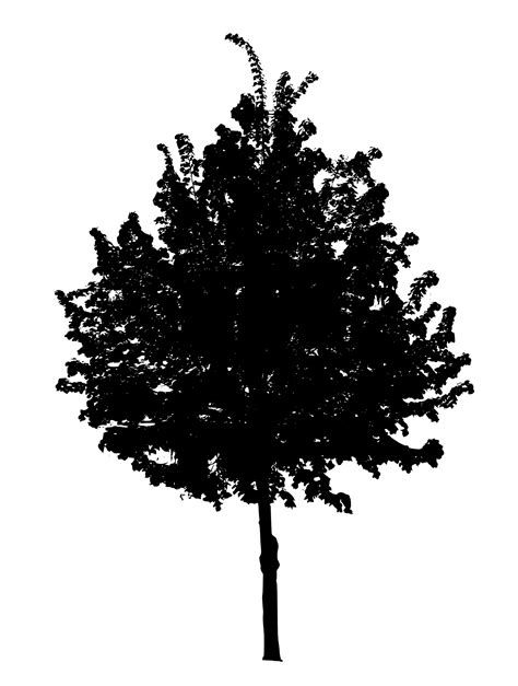7 Black Tree PNG Image Transparent OnlyGFX com