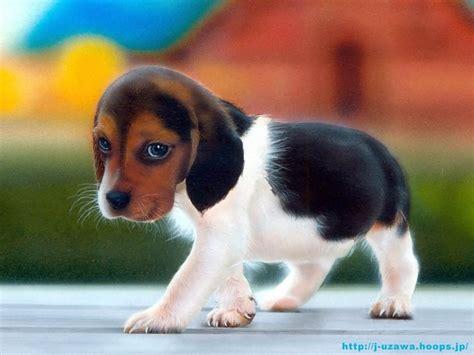 unique wallpaper happy puppy