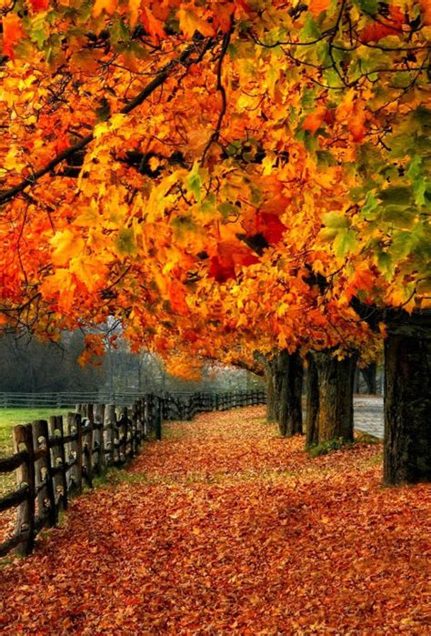 Fall Themed Wallpaper Iphone by Wallpaper Iphone Autumn