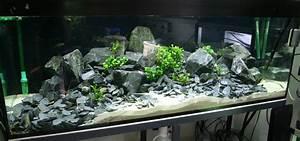 Aquarium Gestaltung Bilder : vom pflanzenaquarium zum nur steine aq tipps ~ Lizthompson.info Haus und Dekorationen