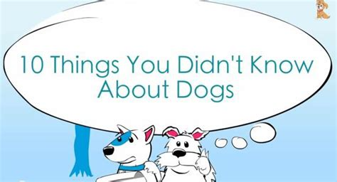 video 10 things you didn 39 t know about dogs the