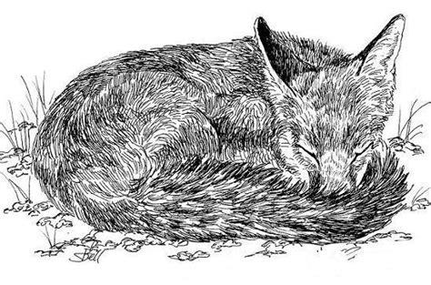 drawing animals    ink art starts  kids