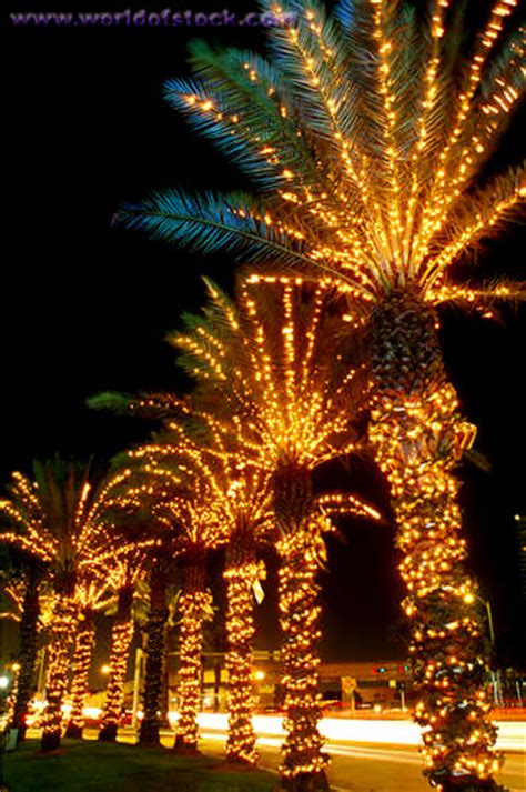 palm trees lights it s beginning to look a lot