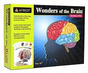 Amazon 10 Best Anatomy Science Kits For Kids