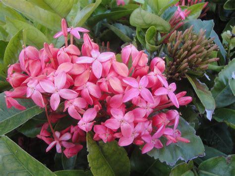 tropical flowering bushes tropical plants webner house