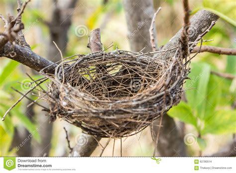 empty birds nest stock photo image