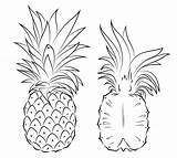Pineapple Coloring Section Pages Printable Cross Drawing Pineapples Fruit Tattoo Pinapple Supercoloring Easy Adult Line Fruits Getdrawings Cartoon Sliced Drawings sketch template