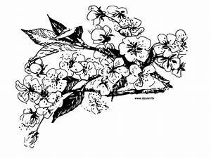 Dessin Fleur De Cerisier Japonais Noir Et Blanc : coloriage fleurs de cerisier ~ Melissatoandfro.com Idées de Décoration