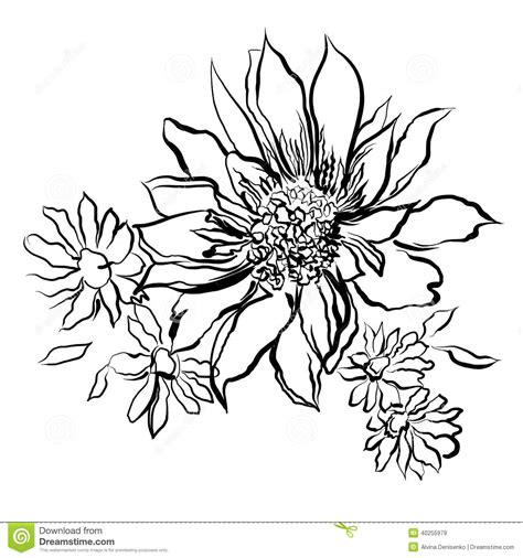 flowers painted black outline   white background