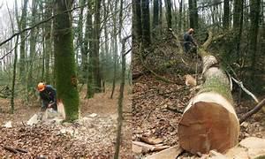 Bois De Chauffage 35 : exploitation foresti re nb bois ~ Dallasstarsshop.com Idées de Décoration