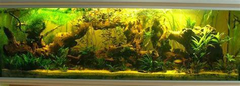 bureau de tabac ouvert le dimanche montpellier ou placer un aquarium 28 images mise en place d un