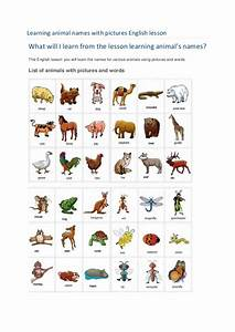 Learning animal names with pictures english lesson