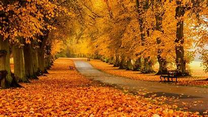 Autumn Colors Foliage Road Meadow Forest Trees