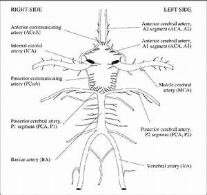 1  Illustration Of The Circle Of Willis With Abbreviations