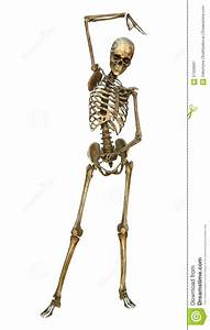 Human Skeleton Stock Illustration  Illustration Of Death