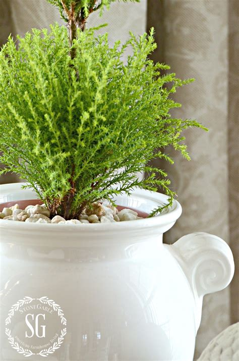 reasons  decorate  plants budget friendly decor