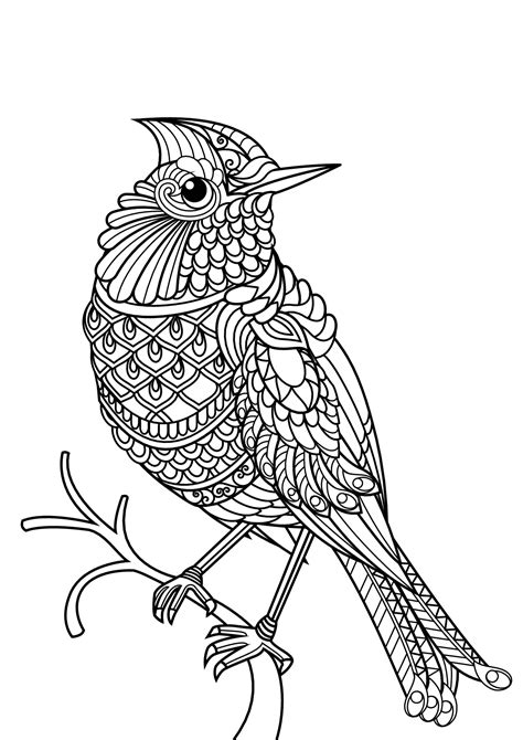 free book bird birds adult coloring pages