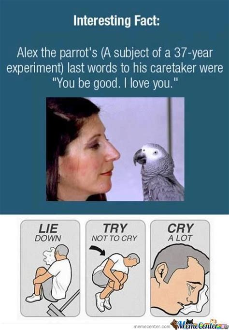 Cry Memes - funny crying memes image memes at relatably com