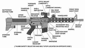 This Picture Illustrates The Parts Of A Rifle  I Chose