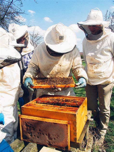 avoir une ruche awesome la premire raison est bien sr