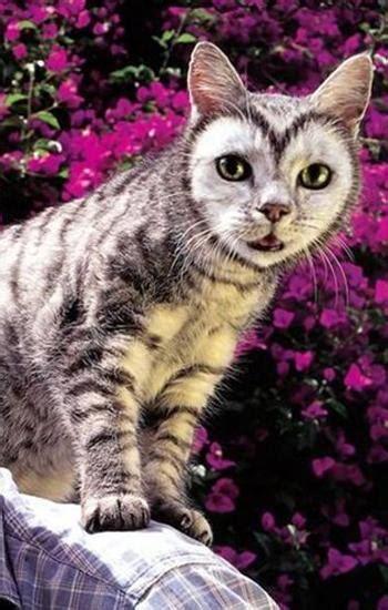 creative grooming design ideas  stylish furry pets