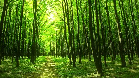 Green Forest Picture by Green Forest Photo Picture Of A Awesome