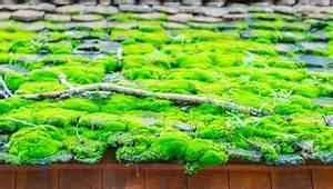 Moos Auf Dem Dach : dach textur download der kostenlosen fotos ~ Watch28wear.com Haus und Dekorationen