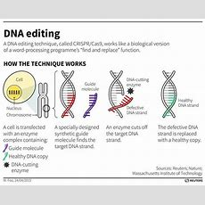 Why We Need Rules For Responsible Gene Editing  World Economic Forum
