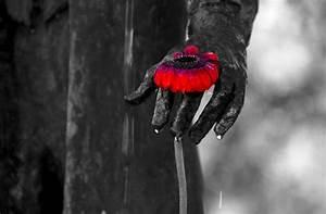 Schwarz Weiß Bilder Mit Farbeffekt Kaufen : pin blume rote rose lizenzfreie stockfotos bild 170238 on pinterest ~ Bigdaddyawards.com Haus und Dekorationen