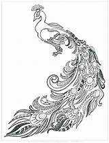 Peacock Pages Coloring Getdrawings sketch template
