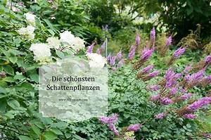 Sträucher Für Garten : die sch nsten pflanzkombinationen f r ein schattenbeet ~ Buech-reservation.com Haus und Dekorationen