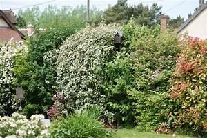 Quels Arbustes Pour Une Haie : quels arbustes pour une haie de 2m au jardin forum de ~ Premium-room.com Idées de Décoration