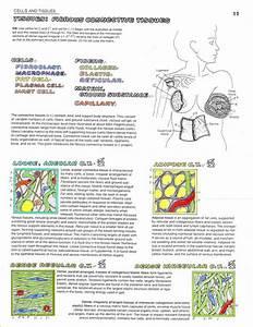 Tissue Pic Assignment