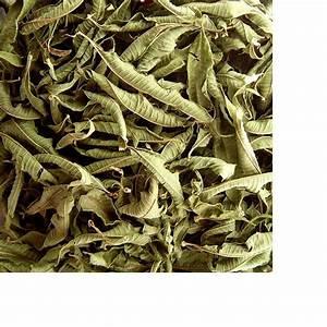 Verveine Plante Tisane : tisane infusette verveine bio x20 comptoir d 39 herboristerie ~ Mglfilm.com Idées de Décoration