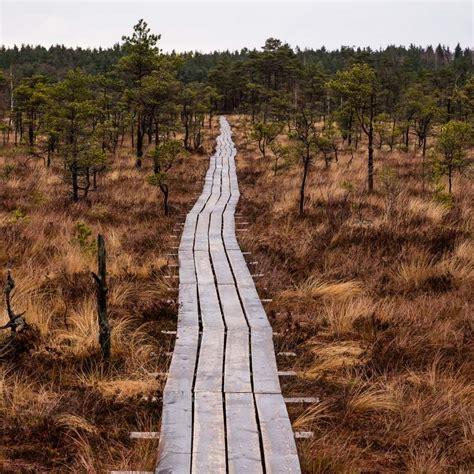 Purvi Latvijā, kurus vērts apmeklēt | Latvia Travel