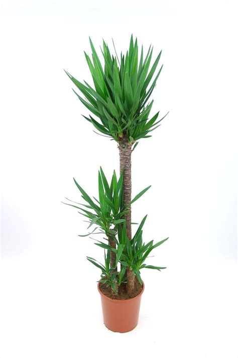 plante d int 233 rieur laquelle choisir quand on n a pas la verte c 244 t 233 maison