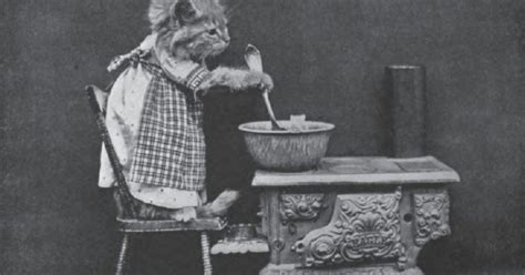 lolcats pictures  harry whittier frees show felines