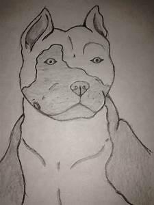 Pitbull head by Ceri19 on DeviantArt