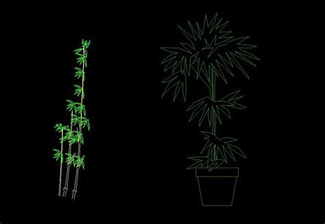 bamboo tree parlor palm plant front view elevation  dwg