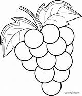 Grapes Coloring Pages Printable Fruit Easy Cartoon Vector Any Adult Device Sheets Preschool Paper Format Animal sketch template