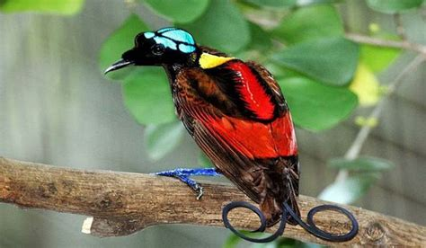 most colorful birds most colorful birds from around the world worldatlas