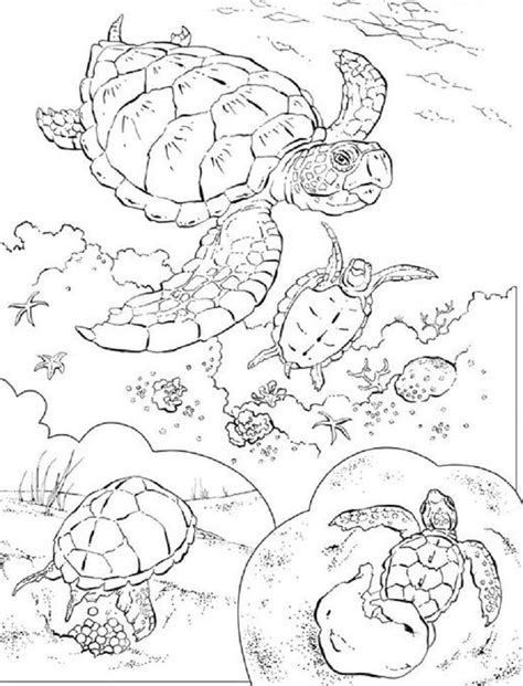 Animal Coloring Pages National Geographic Download or