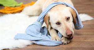 how to train your dog not to chew his bed tail and fur With how to stop a dog from chewing his bed
